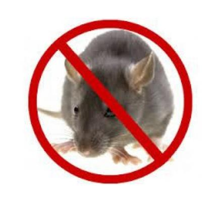 Prevent rodent infestation with Rodent treatment Brisbane