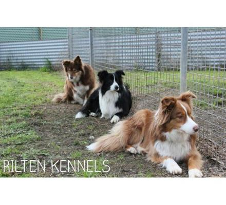 Dog Boarding Kennels Yarrambat – Top Quality Facilities for Your Pets