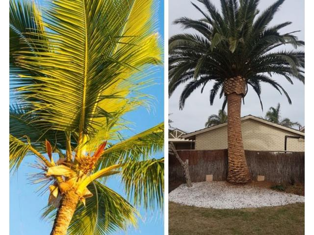 Palm Tree Removal Adelaide