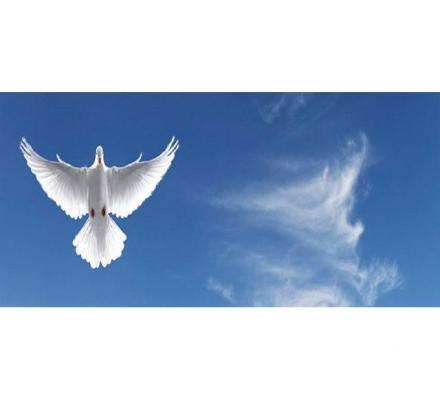 Search for Reputable Funeral Companies for Reliable Services