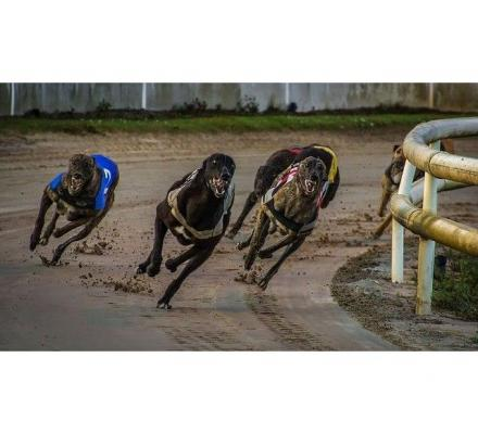 Latest Greyhound Racing Results