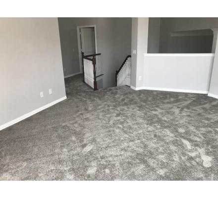 Carpet Cleaning Randwick