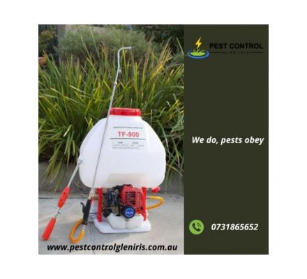 RELIABLE PEST CONTROL SERVICES IN BRISBANE