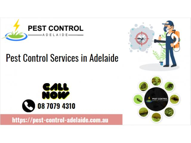Best Pest Control Services in Adelaide