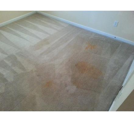Carpet Cleaning Magill