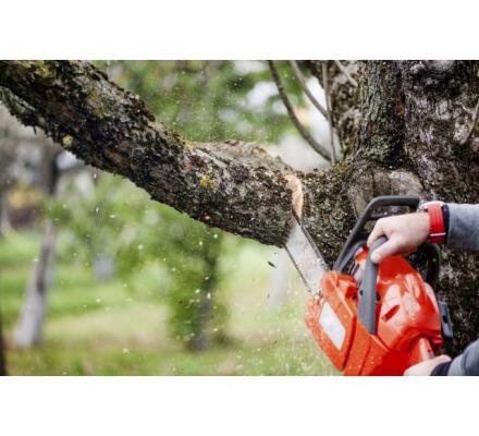 Choosing A Qualified Tree Care Service Company