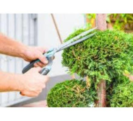 Why Choose Tree Removal Canberra?