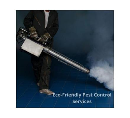 Best Pest Control Services in Stirling