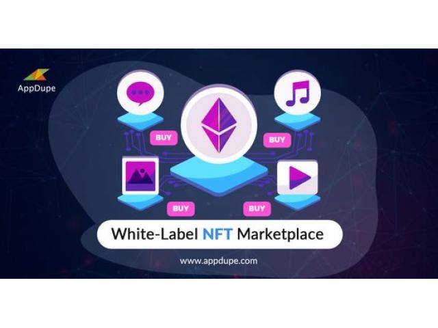 A Ready-made NFT marketplace enables entrepreneurs to directly connect artists with interested buyer