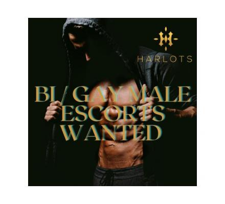 Wanted - Bi/ Gay Males Escorts To Join The Team