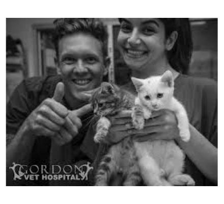 Pet Health Care Professionally Touched By North Shore Vet