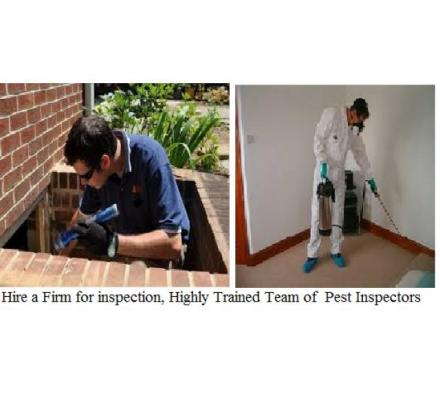 Get Effective Services Related To Termite Control Brisbane