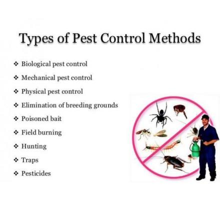 Terminate Disease Carrying Rats with Rodent Treatment Brisbane