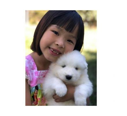 Samoyed puppies for sale.whatsaap me:+639232316532